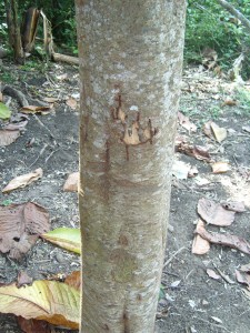 Baum der Bestrafung